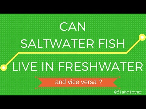Can Saltwater Fish Live In Freshwater And Vice Versa
