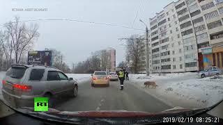 Челябинский полицейский помог хромой собаке перейти дорогу