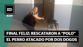 """Rescataron a """"Polo"""", el perro atacado por dogos hace una semana y que estaba desaparecido"""