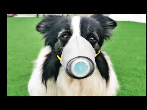 Corona Virus In India Latest Update   How To Save Your Pets Form Carona Virus In Hindi - D.o.b
