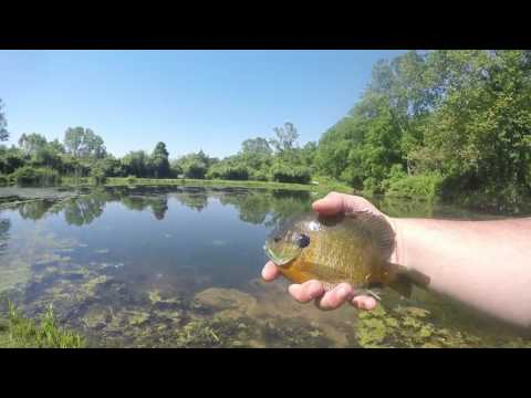 Videos from the Archives (Bluegill bed fishing)