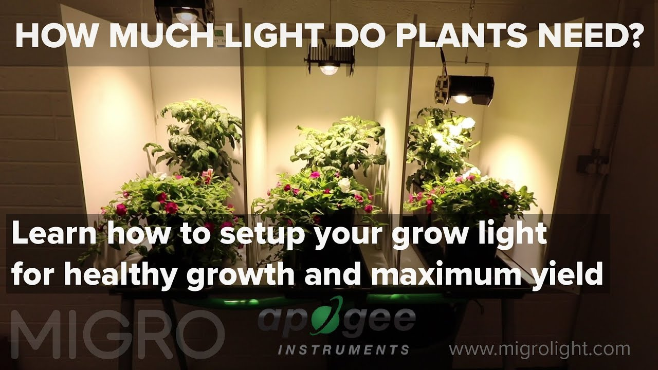 Attractive How Much Light Do My Plants Need? Timelapse Grow And Yield Results Pictures