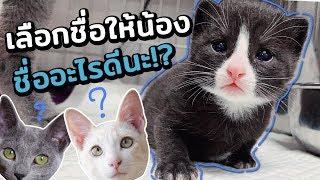 น้องลืมตาแล้ว-ตั้งลูกแมวชื่อว่าอะไรดี