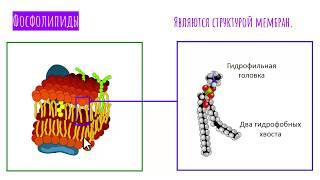 ЛИПИДЫ биология - химический состав клетки