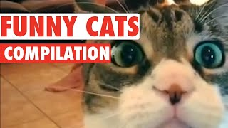 Funny Cat Videos 2020 | Baby and Cat Fun and Fails 2020  | Cute \u0026 Funny Cat Videos Compilation