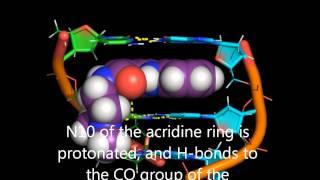 DNA intercalation by acridine-4-carboxamides