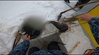 Рыбалка Налим на перемёт 18