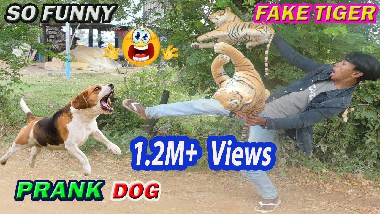 2 Fake Tiger Prank Dogs So Funny 2021