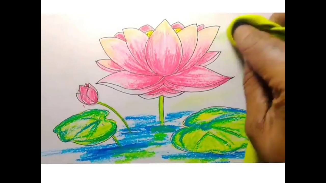 How to draw a lotus with oil pastel for kids youtube how to draw a lotus with oil pastel for kids izmirmasajfo