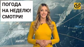 Погода на неделю 27 января - 2 февраля 2020. Прогноз погоды. Беларусь   Метеогид