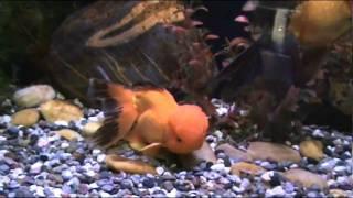 музей золотой рыбки.wmv