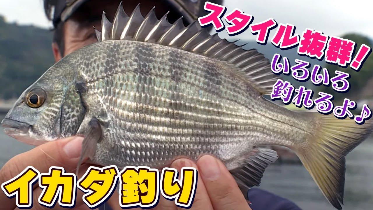 GO!GO!九ちゃんフィッシング #440 「イカダでチヌ釣り!(後篇) 遂に本命クロダイ登場か?」