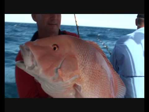 Insane Red Emperor Fishing !! Great Barrier Reef !!