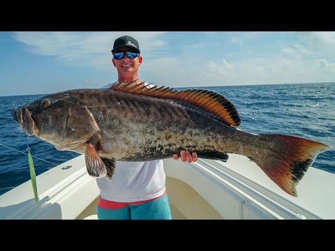 GIANT Rare Grouper! Catch Clean Cook! Copper Belly Gag Grouper- (Panama City Fishing)