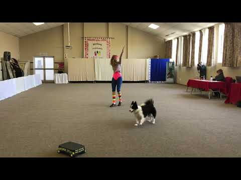 Dog Dancing Competition 1/05/2019