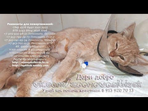 Перелом двух лап и травма мочевого пузыря у котенка Рыжика disabled animals in the shelter