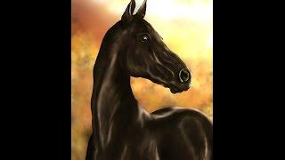 Akhal-Teke Horse - Speedpaint