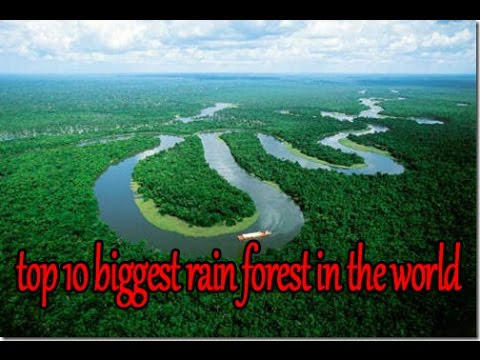 10 Biggest Rainforests in the World - YouTube