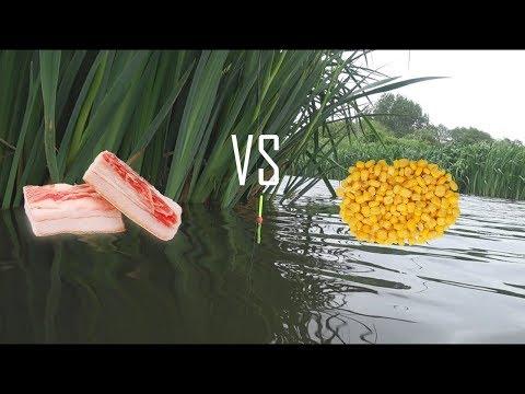 Рыбалка на поплавок в мае!!! САЛО против КУКУРУЗЫ.