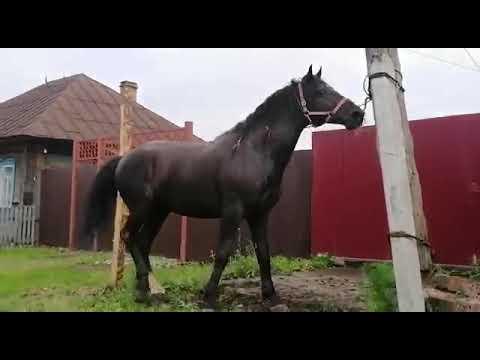 Продажа лошадей Талица