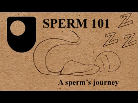With sperm travel distance to the egg