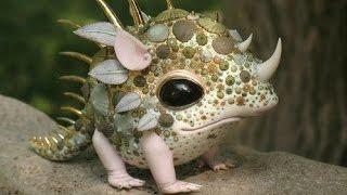 10 Strange Animals You Didn't Know Exist