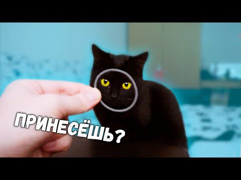 БРОСАЮ своей КОШКЕ игрушку и она ее ПРИНОСИТ / SANI Vlog