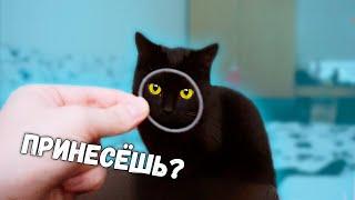 Котенок приносит игрушку как собака. Смешные коты и кошки  Sani Vlog