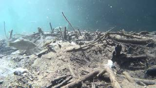 sj 4000 unter Wasser in Full HD (under water movie) GoPro alternative