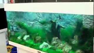 zookauf Aquarien-Einrichtungs-Meisterschaft: Der Film zum Wettbewerb