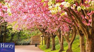 Download Lagu Silent Partner Spring In My Step 1 Hour Version  MP3