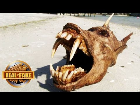 6 Mystery OCEAN MONSTERS Explained - real or fake.