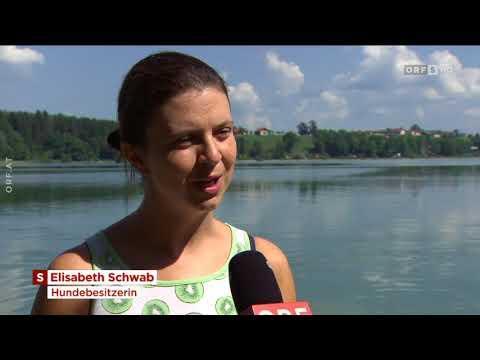 Tierärzte warnen vor gefährlicher Blaualge ORF Salzburg heute