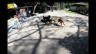 Собаки-склещаки