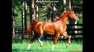 Рыжий конь (не сделано в слайд-шоу) собственое!