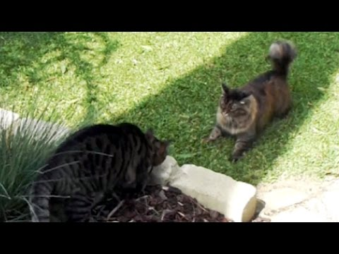 Cats playing pranks. Sneaky cat. Wait for it!