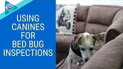 Using Canines for Bed Bug Inspections (episode 100)
