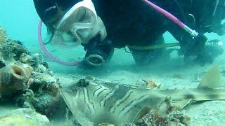Blairgowrie Pier Scuba Blue Ring Octopus, Banjo Shark & More 2015 HD