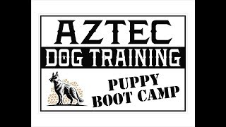 Puppy Obedience Training - Puppy Bootcamp - Dog Training