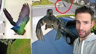 Testing Floaty bird floating – Is it Fake?
