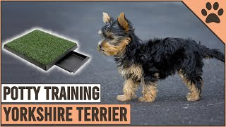 Secret Tips On How To Potty Train A Yorkshire Terrier   Dog World