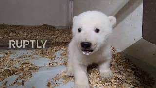 It's a girl! Berlin zoo reveals sex of polar bear cub