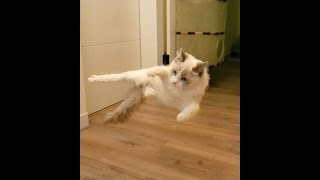 кот набухался встать не может