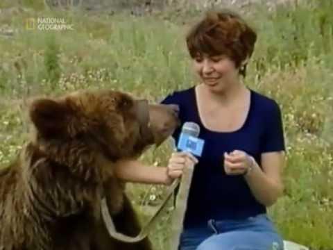 Медведь напал на