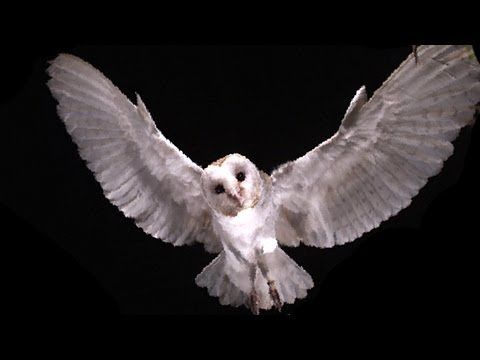 Slow Motion Barn Owl Attack | Slo Mo #11 | Earth Unplugged
