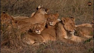 Pt 2  Safari Live's Sunrise Safari Drive at 8:30 AM on May 05, 2018 ( Tingana, Nkuhumas )