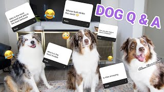 My Dogs Answer M๐st Asked Questions *SECRETS REVEALED*