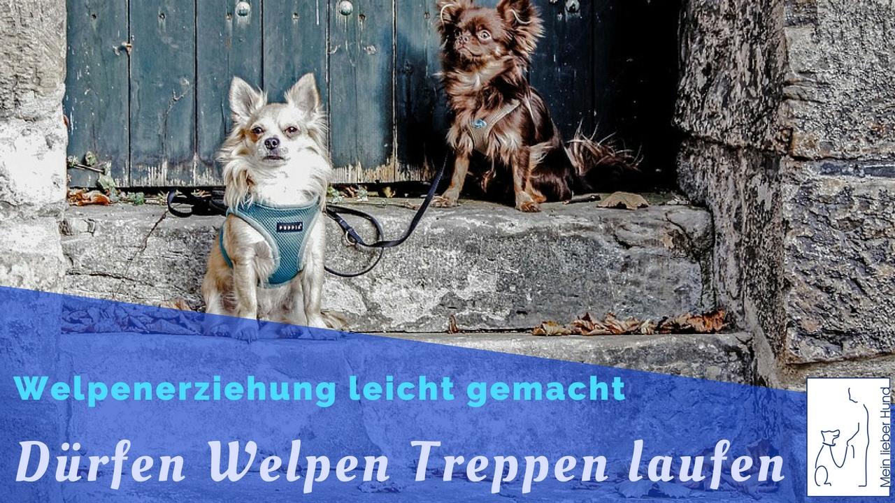Durfen Welpen Treppen Laufen Welpenerziehung Mein Lieber Hund Youtube