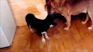 Собаку укусили враги