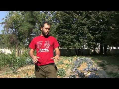 Come fare l 39 orto invernale viyoutube for Orto invernale